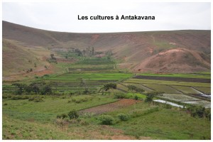 Anta culture